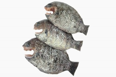 Pearl Spot / Karimeen / Koral (Medium) (80g to 150g) - Whole cleaned