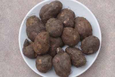Koorkan Root / Chinese Potato