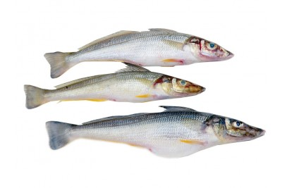 Lady Fish / Kane / Silver Whiting (Small) - Whole