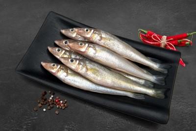 Lady Fish / Kane / Silver Whiting