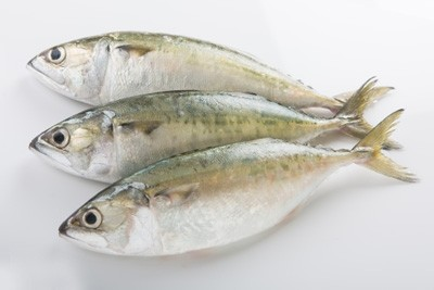 Mackerel / Ayala / Bangda / Aylai (5 to 9 Count/kg) - Whole (Not Cleaned, Not Gutted)