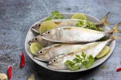 Mackerel / Ayala / Bangda / Aylai (15+ Count/kg)