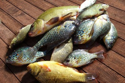 Backwater Mix Fish