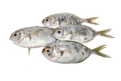 Tropical Pony Fish / Para Mullan / Paniyara Para - Whole