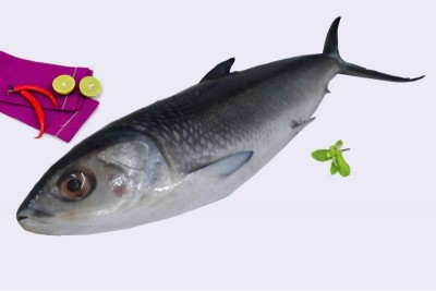 Large Milk Fish / Pookanni - Whole