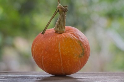 Pumpkin - Disco