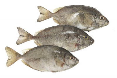 Rabbit Fish / Otti / Ora