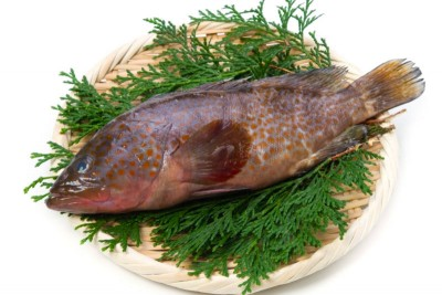 Grouper / Reef Cod / Kalava (Small) - Whole