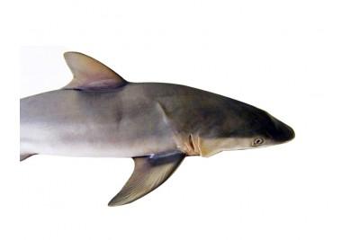 Shark Liver