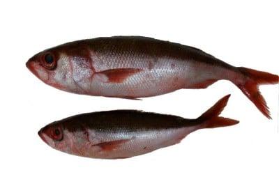 Silk Fish - Whole