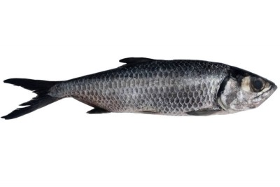 Freshwater Mullet / Kayal Kanni (Large) - Whole