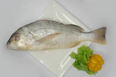 Silver Snapper / Cochin Marine Catla - Whole (Descaled,Cleaned, Not Cut In Pieces)