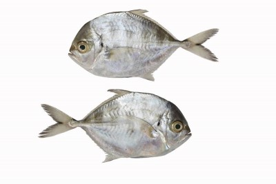Trevally / Vatta (Small) - Whole