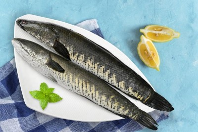 Snake Head Fish / Varaal / Bral / Kannan - Whole