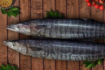 Spanish Seer Fish (Large)