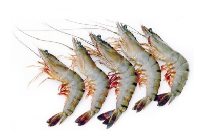 Tiger Prawn (Super Large)