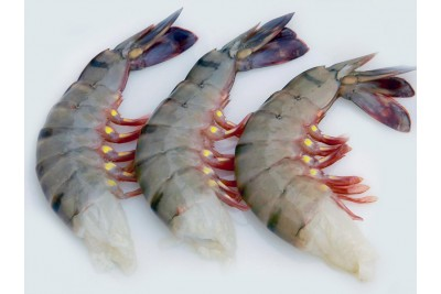 Tiger Prawn / Bagda Chingri - Headless (No Head, Rest with shell, tail)