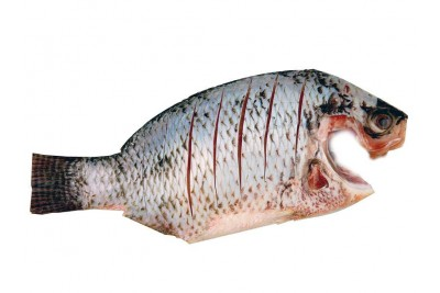 Tilapia / Jalebi Fish (Large) - Whole Cleaned