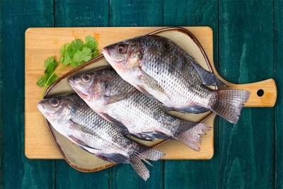 Tilapia / Jalebi Fish (Large) - Whole
