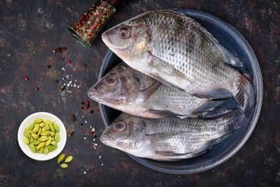 Tilapia / Jalebi Fish