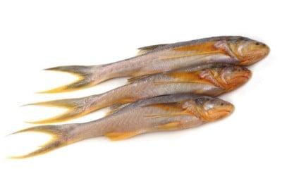 Kolkata Topshe / তপসে / Mango Fish / Cichlid