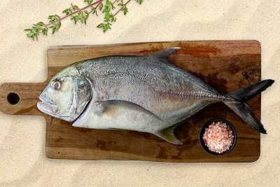 Trevally / Vatta (Large)  - Whole