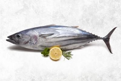 Tuna / Choora / Choorai