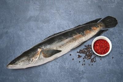Snake Head Fish / Varaal / Bral / Kannan / Murrel - Whole