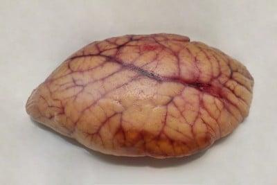 Trevally / Vatta - Roe / Egg