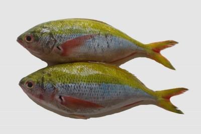 Fusilier / Vyram Fish - Whole