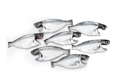 White Fish / False Trevally / Parava - Whole cleaned