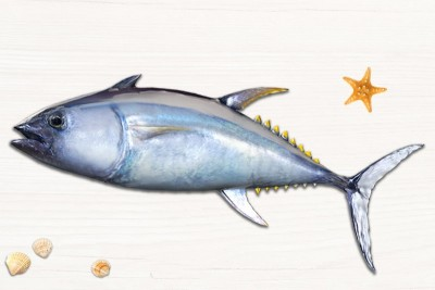 Yellow Fin Tuna / Kera - Whole