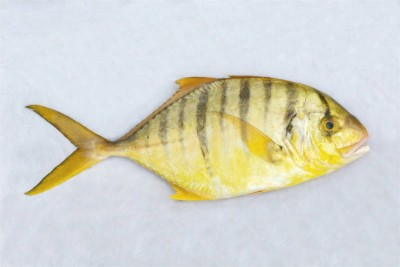 Golden Trevally / Zebra Vatta - Whole
