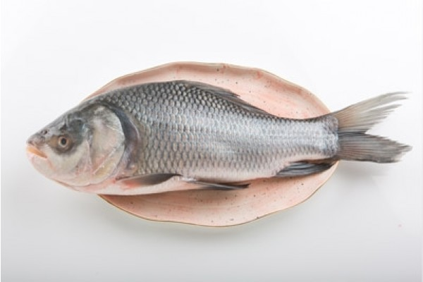 Freshtohome - Buy Fresh Fish, Chicken and Mutton Online