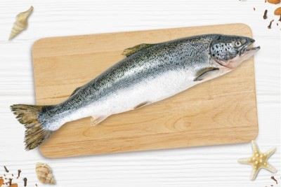 Farmed Fresh Atlantic Salmon / السالمون