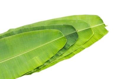 Banana Leaf - 5 unit