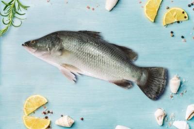 Bhetki / ভেটকী / Barramundi / Asian Seabass / Kalanji - Whole