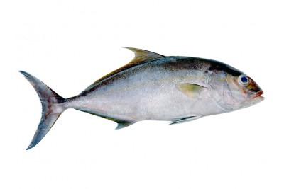 Butter Fish / Punnarameen (Soft as Butter)