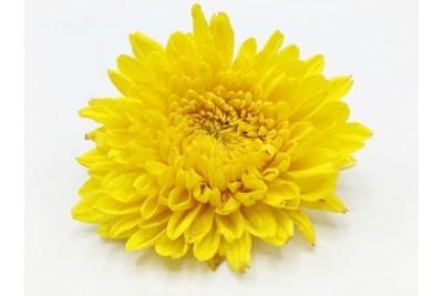 Chrysanthemum Flowers-Yellow (Pack of 200g)
