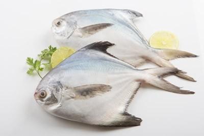 Silver Pomfret / Zubaidy / Avoli (100g to 200g)