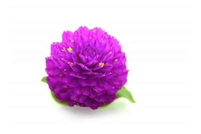 Globe Amaranth Flowers/ Vada Malli -(Pack of 200g)