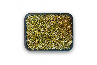 Moong Sprout (AE) -Pack of 200g