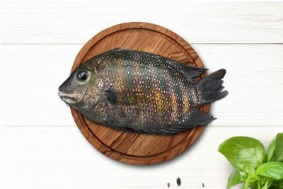 Premium Kumarakom Karimeen / بلطي هندي - سمك كريمين - كبير الحجم / Pearlspot (Large)