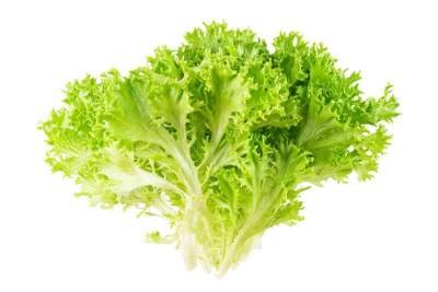 Lettuce Frisee Green - 1 Unit (NL)