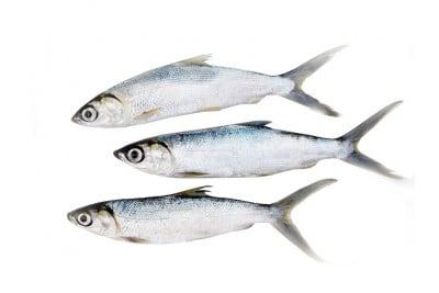 Marine Milk Fish / Poomeen (Small)