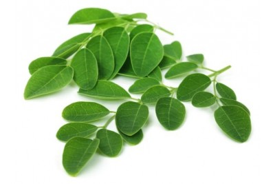 Moringa Leaf (IN) - 1 Bunch