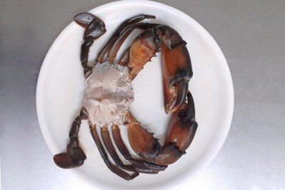 Mud Crab - Cut with Shell
