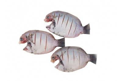 Pearl Spot / Karimeen / Koral (Super Large) - Skinless Whole Cleaned (400g Pack)