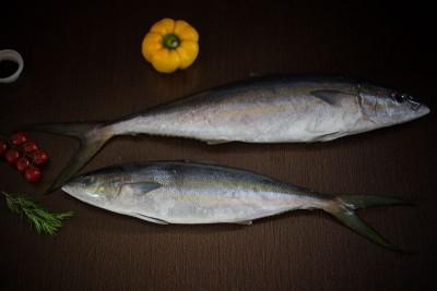 Marine Milk Fish / Nemara / Bangos / Poomeen (Medium) - Whole  (As is without cleaning and cutting)