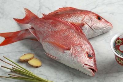 Red Snapper / Chempalli / Hamra (Large)